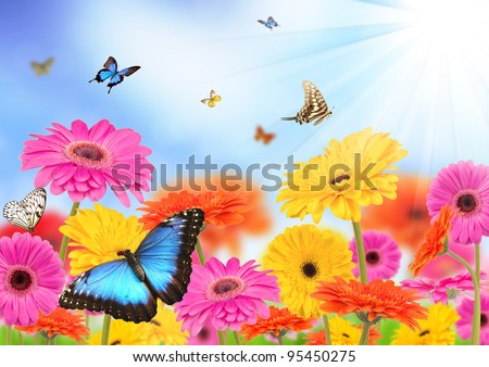 Beautiful gerber flowers with butterflies - stock photo