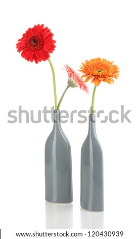 Beautiful gerber in vase isolated on white