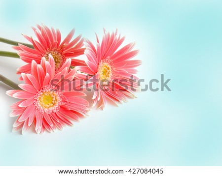 Beautiful gerbera flower vintage background