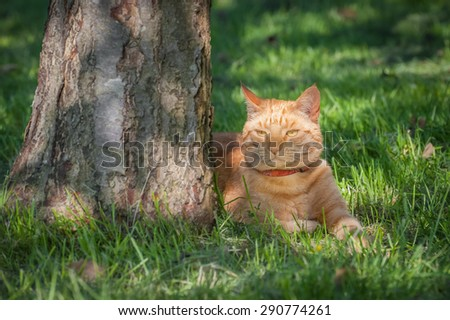 beautiful ginger cat chilled out in the shade of a tree - stock photo