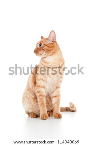 beautiful ginger cat sitting isolated on white background - stock photo