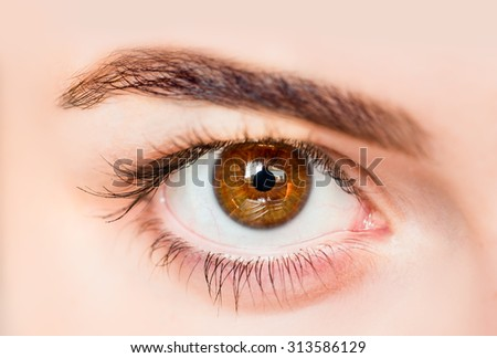 beautiful girl brown eye