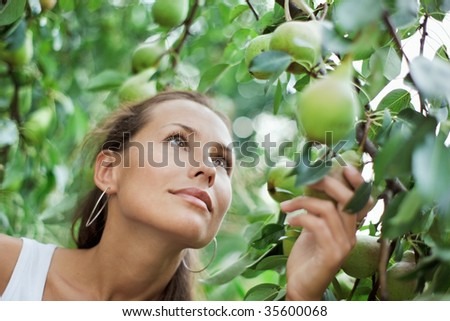Beautiful girl picking the pear in the garden