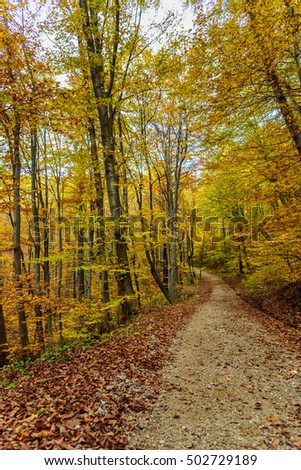 Beautiful golden autumn in the mountains - trees in bright yellow leaves, bathing in the last rays of sunshine - picturesque scenery