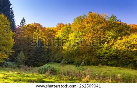 Beautiful golden autumn landscape - stock photo