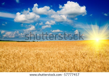 Beautiful golden field of ripe wheat and fun sun by summer.