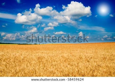 Beautiful golden field of ripe wheat and fun sun by summer. - stock photo