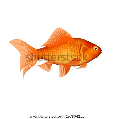 Beautiful Golden Fish on white background.