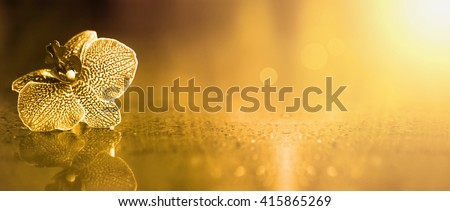 Beautiful golden orchid flower banner with copy space - stock photo
