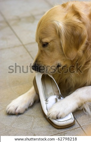 how to stop dog chewing on shoes