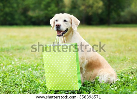 Beautiful Golden Retriever dog holding green shopping bag in teeth on grass in summer day