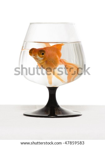 Beautiful goldfish is swimming in the glass - stock photo