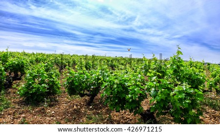beautiful grape tree, tasty wine, beautiful nature of cyprus mountains, blue sky and a butterfly - stock photo