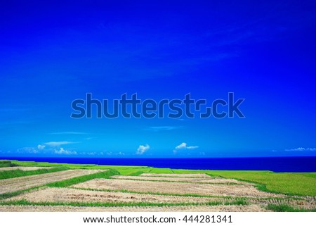 Beautiful grass and Pacific ocean