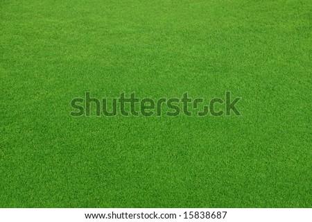 Beautiful grass field texture - stock photo