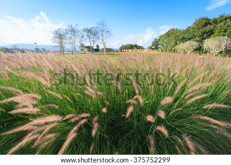 Beautiful grass flowers. select focus - stock photo