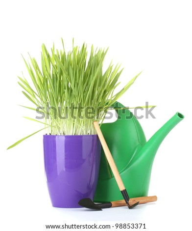 beautiful grass in a flowerpot, watering can and garden tools isolated on white - stock photo