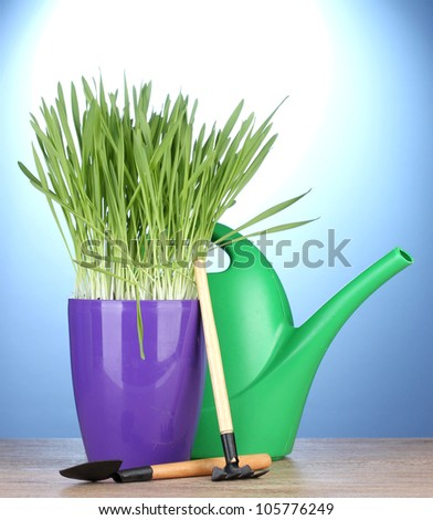 beautiful grass in a flowerpot, watering can and garden tools on wooden table on blue background - stock photo