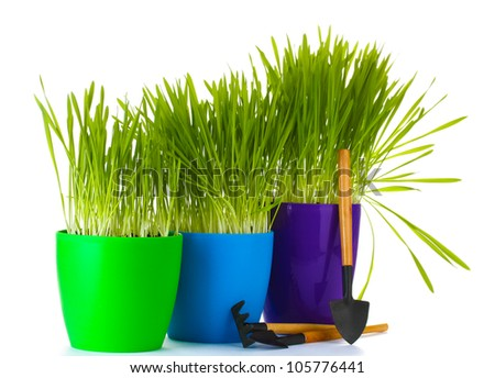 beautiful grass in a flowerpots and garden tools isolated on white - stock photo