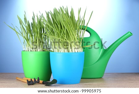 beautiful grass in a flowerpots, watering can and garden tools on wooden table on blue background - stock photo
