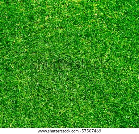 Beautiful grass texture - stock photo