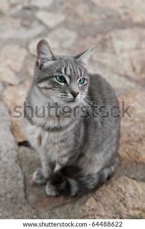 Beautiful gray cat sitting on the ground - stock photo