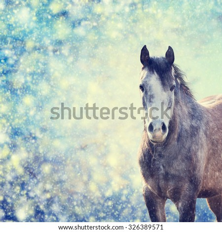 Beautiful  gray horse portrait on winter background of snow-fall,  toned - stock photo