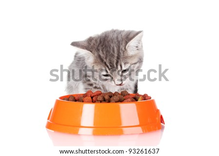 Beautiful gray kitten and dry food in bowl isolated on white - stock photo