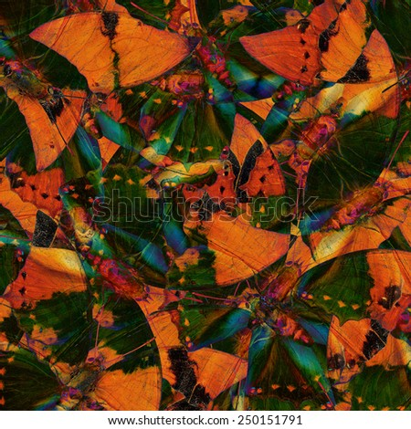 Beautiful Green and Brown Background Texture made of Tawny Rajah Butterflies - stock photo