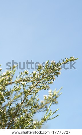 Beautiful green and white flowers on bright blue sky background. Shallow depth of field