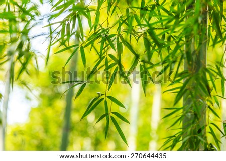 beautiful green bamboo forest - stock photo