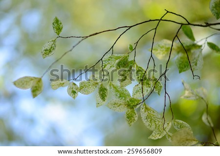 Beautiful green bokeh background with fresh green leaves - stock photo