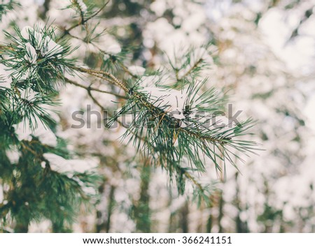 Beautiful green branch in snow after the snowfall
