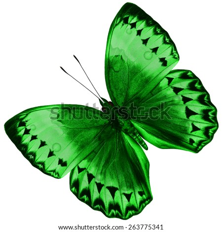 Beautiful Green Butterfly (Cambodia Junglequeen) isolated on white background with nice color profile and details