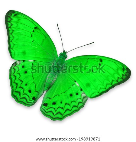 Beautiful green butterfly, isolated on white background