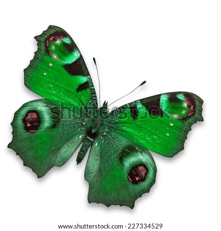 Beautiful Green butterfly isolated on white background. - stock photo