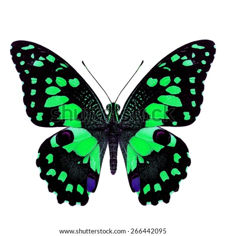 Beautiful green butterfly, Papilio demoleus Linnaeus in fancy color profile isolated on white background, soft focus - stock photo