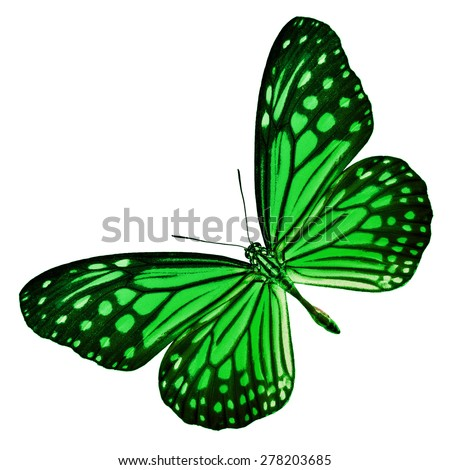 Beautiful Green butterfly upper wing profile isolated on white background