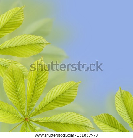 Beautiful green chestnut leaves. Background, Leaves pattern - stock photo