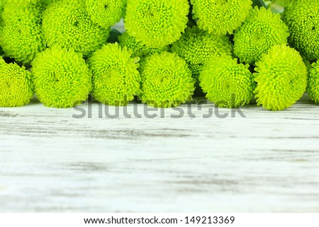 Beautiful green chrysanthemum on table close-up - stock photo
