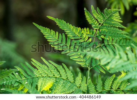 Beautiful green fern in a forest in the sunlight. - stock photo
