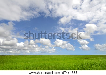 Beautiful green field with blue cloudy sky - stock photo