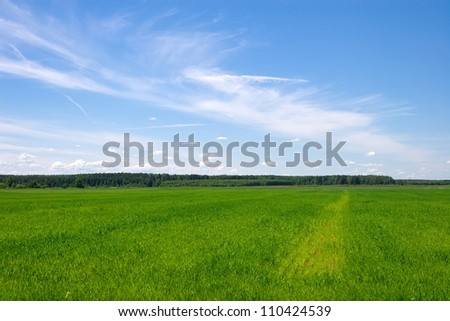 Beautiful green field with blue sky during summer day - stock photo