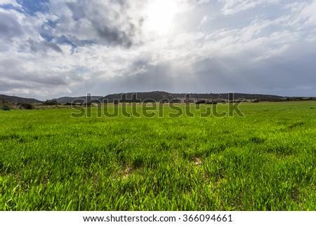beautiful green fields background - stock photo