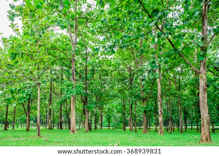 beautiful green forest. - stock photo