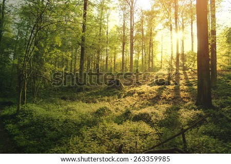 beautiful green forest at sunset - stock photo