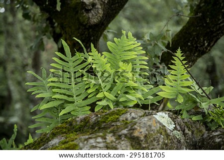 beautiful green forest detail. Mexico, mountain landscape. - stock photo