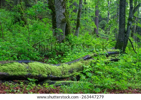 Beautiful green forest in national park Plitvica, Croatia