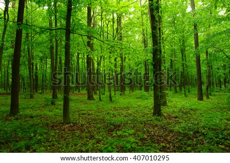 beautiful green forest in spring