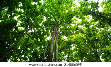 beautiful green forest in summer - stock photo